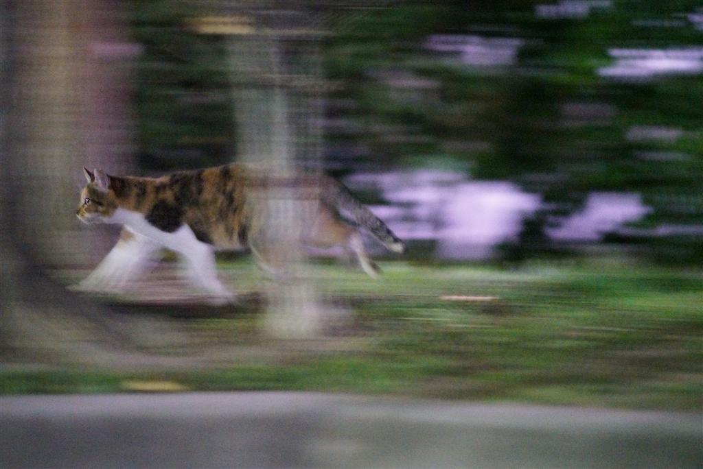 価格.com - 『夜公園走り回るネコ2』オリンパス OM-D E-M1 Mark II ボディ お~くてぃさん のクチコミ掲示板投稿画像・写真「猫 撮影」[2711933]