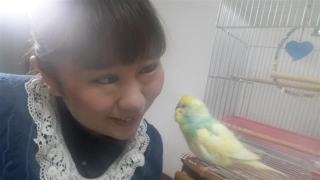 『お話中』インコ セキセイインコ  君影さんのクチコミ掲示板画像3/3