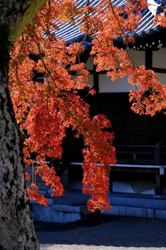 『飯能市能仁寺にて』富士フイルム FUJIFILM X-H1 ボディ  m2 mantaさんのクチコミ掲示板画像4/4