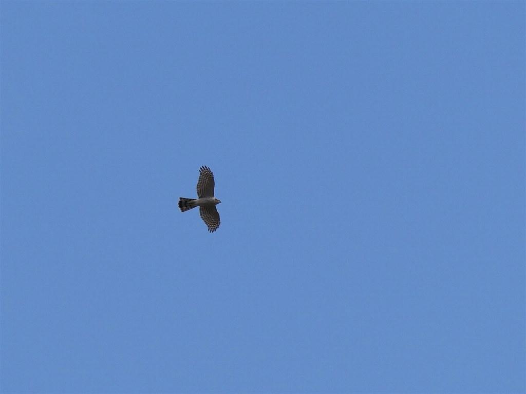 お気に入りのズームレンズで撮った野鳥をお見せ下さい クチコミ